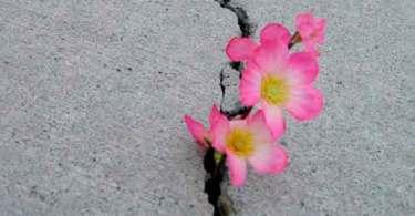 Por que não existem milagres visíveis e evidentes nos dias de hoje?