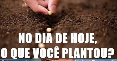 No dia de hoje, o que você plantou?