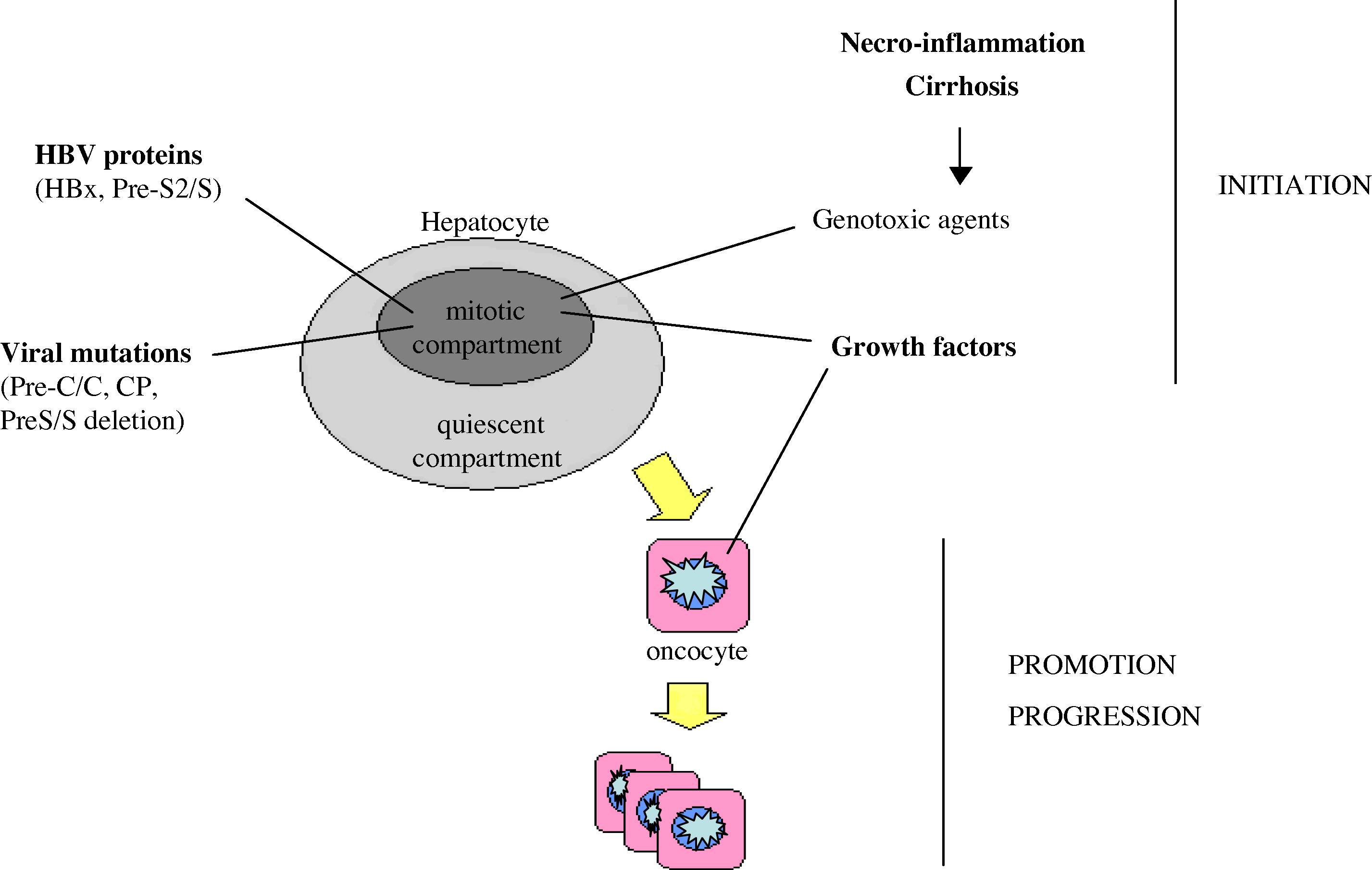 Effects Of Hepatitis B
