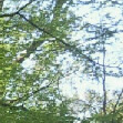 En forêt, il y a des arbres !