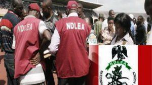 Cocaine Worth '₦264m' Seized in Abuja, Kogi – NDLEA