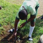 Epe Agog As EcoAmbassadors, Others Celebrate World Environment Day In Style
