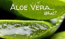 Aloe vera - What?