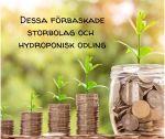 Storbolag och hydroponisk odling
