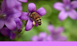 Burt's Bees riskerar rättsliga åtgärder