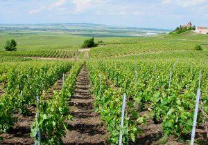 Vignobles bordelais grêle