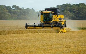 wheat-317021_640_photo_Kaz