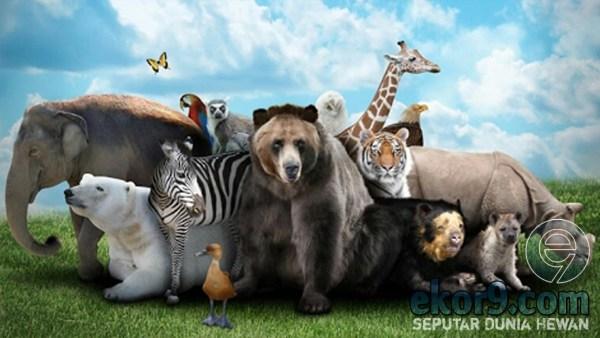 dunia hewan, dunia binatang, ekor9, gambar, logo, wallpaper