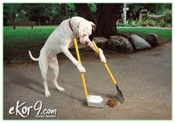 cara melatih anjing buang air di kamar mandi, cara melatih anjing agar tidak buang air besar sembarangan, cara melatih anjing agar tidak pipis sembarangan, cara melatih anjing buang air di toilet, cara melatih anjing dewasa, cara melatih anjing kencing di kamar mandi, cara melatih anjing kencing di toilet, cara melatih anjing kencing pada tempatnya, cara melatih anjing pipis di toilet, cara melatih anjing pipis pada tempatnya
