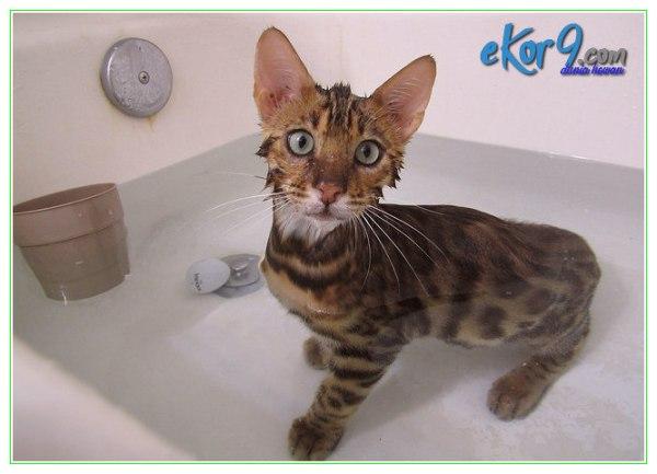 cara merawat gigitan kutu kucing, cara merawat kucing ada kutu, cara merawat kucing agar terhindar dari kutu, cara merawat kucing dari kutu, cara merawat kucing yang terkena kutu, cara merawat kutu anak kucing, cara merawat kutu kucing, cara merawat kutu kucing pada manusia, cara merawat kutu pada kucing, cara merawat kutu telinga kucing, cara mudah bunuh kutu kucing, cara tradisional bunuh kutu kucing, cara tradisional merawat kutu telinga kucing, petua hilangkan kutu kucing dalam rumah