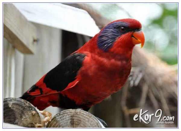 47+ Hewan endemik pulau papua terbaru