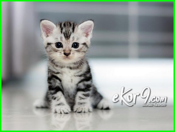 bayi kucing lucu dan imut, anak kucing lucu dan imut anak kucing lucu sedunia, anak kucing lucu menggemaskan, anak kucing lucu banget, anak kucing lucu imut, anak kucing lucu murah, anak kucing lucu bergerak, anak kucing lucu dan menggemaskan, anak kucing lucu dan cantik, anak kucing lucu di dunia