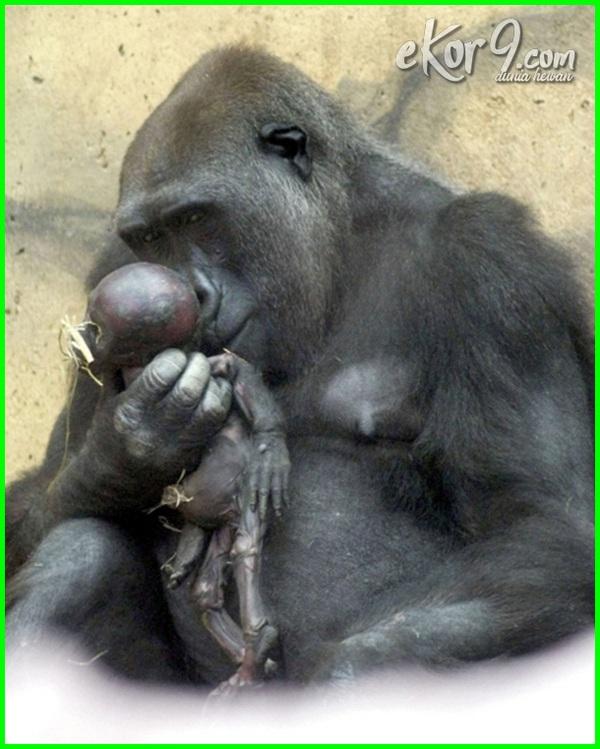 binatang bersedih, foto hewan menangis gambar hewan menangis