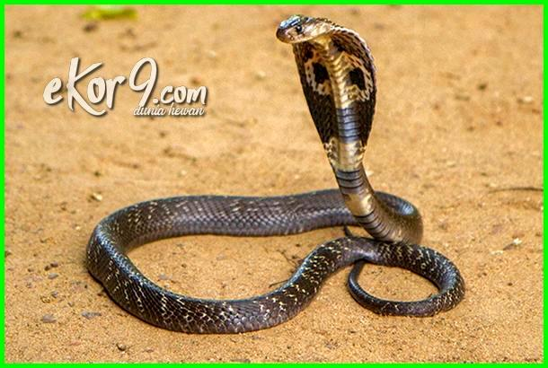 hewan ditakuti ular