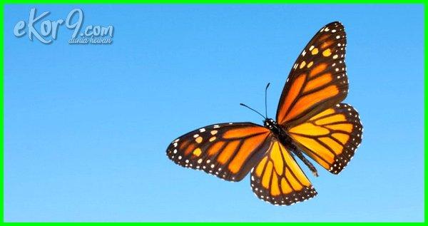 hewan yang hidupnya di udara, gambar hewan hidup di udara, contoh hewan hidup di udara