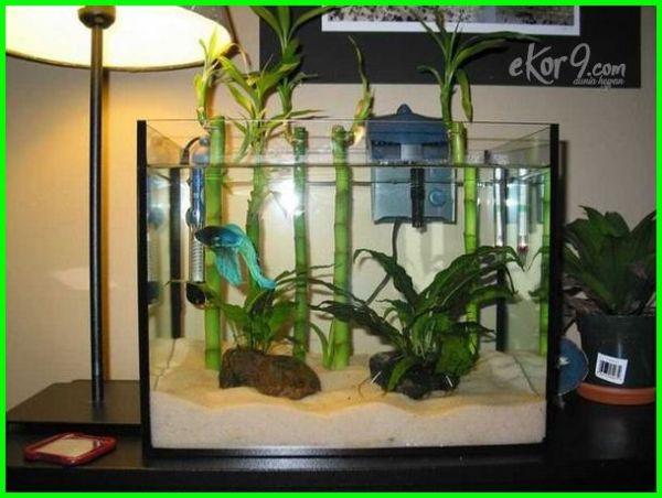 akuarium ikan cupang, aquarium ikan cupang, aquarium ikan cupang hias, aquarium ikan cupang minimalis, akuarium ikan cupang kaskus, akuarium ikan cupang unik, aquarium ikan cupang kaskus, aquarium ikan cupang di jakarta, jual aquarium ikan cupang murah, aquarium ikan cupang murah, aquarium ikan cupang mini