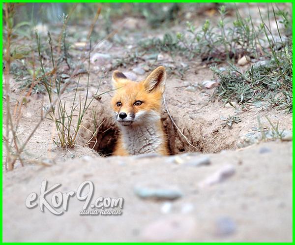 hewan yang hidup diatas tanah disebut yg dibawah di dalam didalam dlm bawah dan tumbuhan lapisan bagian contoh jenis binatang gambar d kering permukaan tempat bakteri didlm 3 5