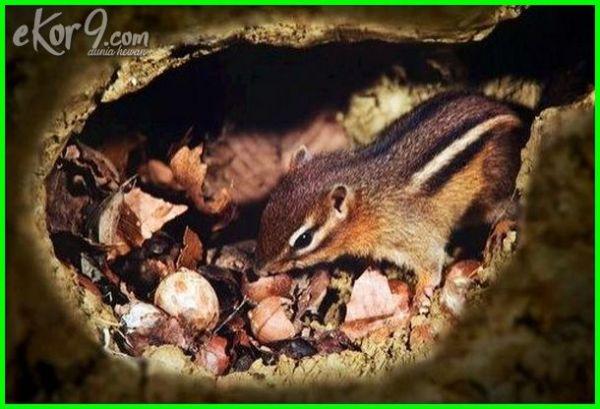 hewan omnivora apa yang makanannya berada di bawah tanah