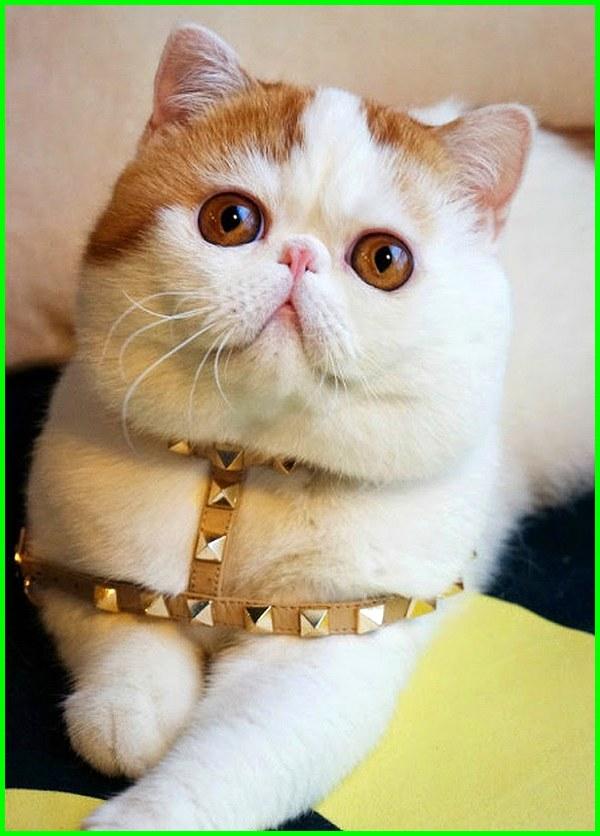 Unduh 61+  Gambar Kucing Lucu Berkacamata Terbaru