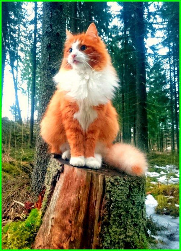 Gambar Kucing Cantik godean.web.id