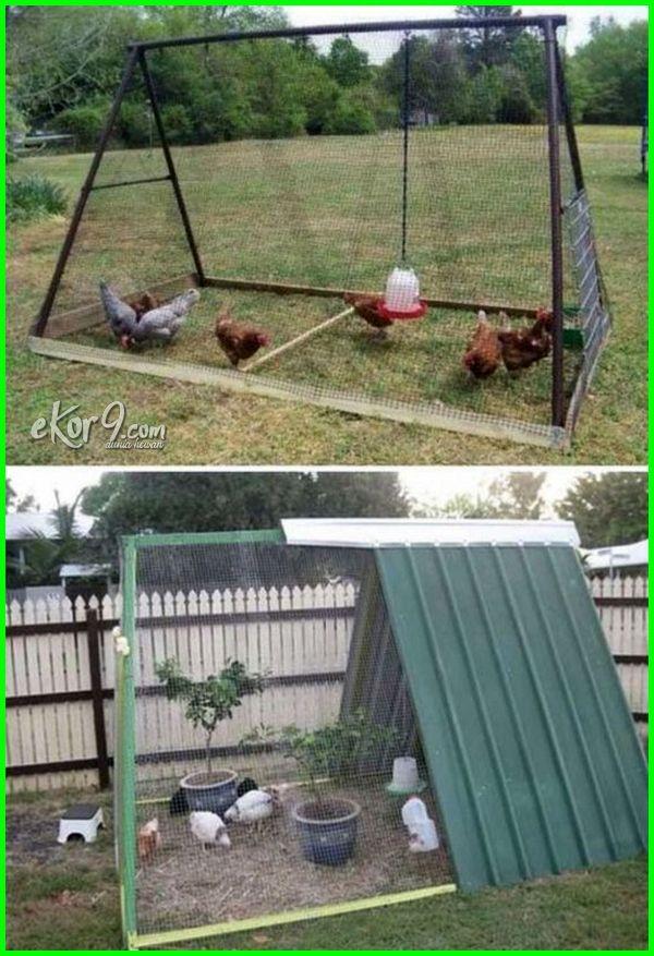Kandang Ayam Adu Kandang Ayam Arab Kandang Ayam Alas