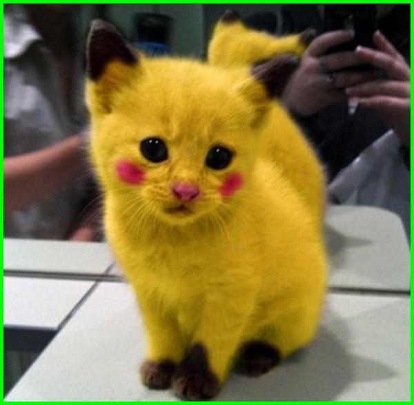 kucing bergambar pikachu