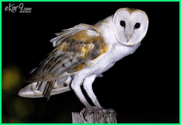 yang termasuk hewan nokturnal adalah, hewan nokturnal bermata besar, bagaimana hewan nokturnal, hewan nokturnal adalah brainly, hewan nokturnal contoh, hewan nokturnal contohnya, ciri hewan nokturnal, contoh hewan nokturnal dan diurnal