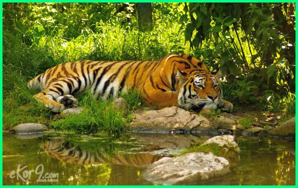 hewan yang suka tidur lama, hewan apa yang paling lama tidur, hewan yang memiliki tidur paling lama, hewan mamalia yang tidur paling lama, hewan yang memiliki tidur paling lama adalah, lama waktu tidur hewan