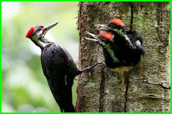 620+ Gambar Hewan Yang Hidup Di Pohon Gratis Terbaik