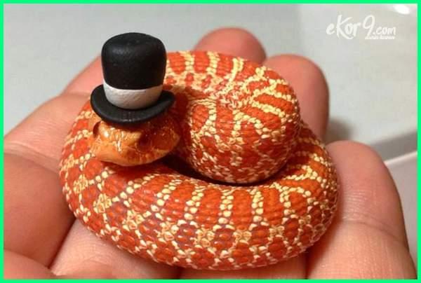 foto gambar ular memakai topi, gambar ular lucu bergerak, cobra tangan kepala dua kartun, tangga animasi yang pawang paling besar, cium kobra dp download makan gajah, yg tentang menyelamatkan ikan penakluk tenggelam meme penari