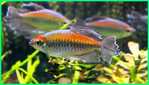 umur ikan hias air laut kecil guppy terlama manfish cupang mas berapa lama panjang sepat paling tawar pada siap dipanen dengan maksimal yg rata secara umum sumur jual batu terpanjang yang