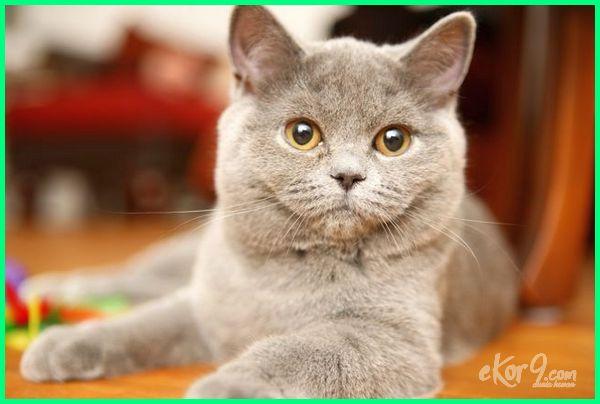 memelihara kucing dalam islam, memelihara kucing hitam menurut islam, kelebihan kucing dalam islam, fakta tentang kucing menurut islam, memelihara kucing menurut islam, kucing dalam islam, sejarah kucing dalam islam