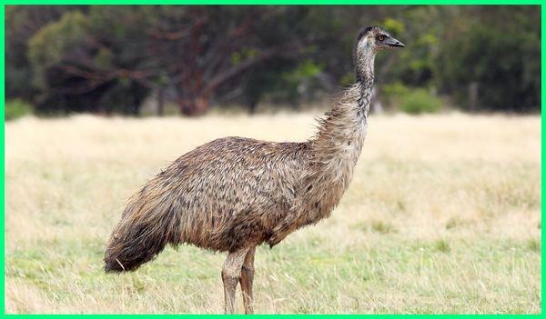 binatang khas australia adalah