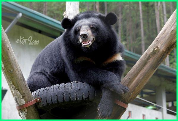 6100 Gambar Hewan Beruang Madu Terbaik