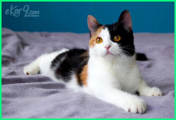 Download 93+  Gambar Kucing Nabi Muhammad Paling Imut