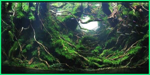 aquascape gaya hutan, bisakah membuat aquascape tanpa filter, bisakah lumut untuk aquascape, haruskah aquascape menggunakan co2, haruskah aquascape menggunakan filter, kenapa aquascape berlumut, kenapa aquascape keruh, kenapa aquascape butuh co2, kenapa aquascape berbusa, kenapa aquascape gagal, kenapa aquascape mahal, kenapa tanaman aquascape menguning, kenapa tanaman aquascape mati, kenapa air aquascape kuning, kenapa ikan aquascape mati, mengapa tanaman aquascape menguning