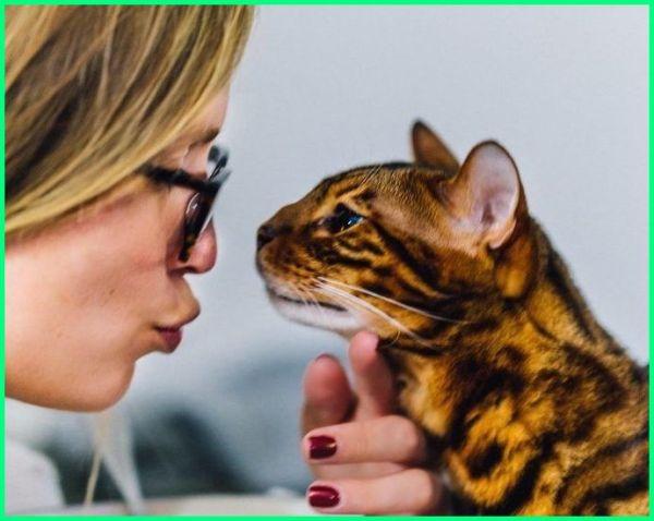 apa manfaat kucing bagi lingkungan, apa manfaatnya hewan kucing, manfaat merawat kucing menurut islam, manfaat liur kucing, manfaat liquid kucing, manfaat mengurus kucing, manfaat mengelus kucing, manfaat pelihara kucing dalam islam manfaat kucing untuk manusia, kucing dan pemiliknya