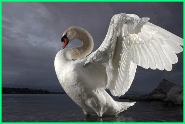 7 burung terbesar di dunia, 10 burung terbesar di dunia, burung terbesar di dunia 2012, 5 burung terbesar di dunia, burung laki laki terbesar di dunia