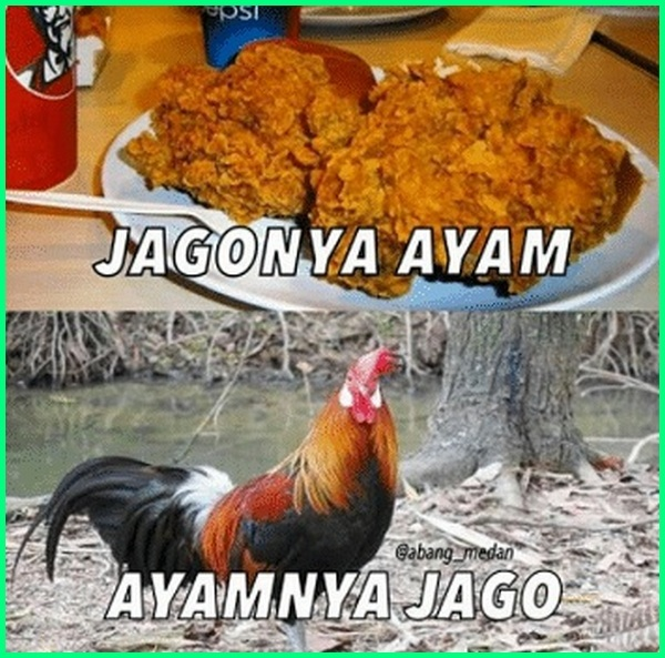 Ayam Kfc Lucu Ayam Kfc Yang Lucu Meme Ayam Kfc Meme Ayam Cfc