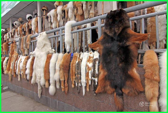 contoh hewan yang diambil kulitnya, contoh hewan yang dimanfaatkan kulitnya, hewan yang diambil kulitnya untuk dimanfaatkan, hewan yang dapat dimanfaatkan kulitnya antara lain, hewan yang diburu kulitnya untuk hiasan antara lain, hewan yang umumnya dimanfaatkan bagian kulitnya oleh manusia adalah, hewan berikut ini yang dimanfaatkan kulitnya untuk pembuatan tas adalah, hewan yang diburu diambil kulitnya adalah, hewan yang diburu untuk diambil kulitnya adalah, contoh hewan yang diambil kulitnya, hewan yang diburu kulitnya
