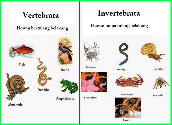 hewan vertebrata dan avertebrata, hewan vertebrata dan invertebrata, hewan vertebrata dan contohnya, hewan vertebrata dan avertebrata kelas 5 sd, hewan vertebrata dan ciri cirinya, hewan vertebrata dan gambarnya, hewan vertebrata dan avertebrata adalah, hewan vertebrata dan avertebrata beserta ciri cirinya, hewan vertebrata adalah dan contohnya, perbedaan hewan vertebrata dan avertebrata, hewan vertebrata dan invertebrata powerpoint