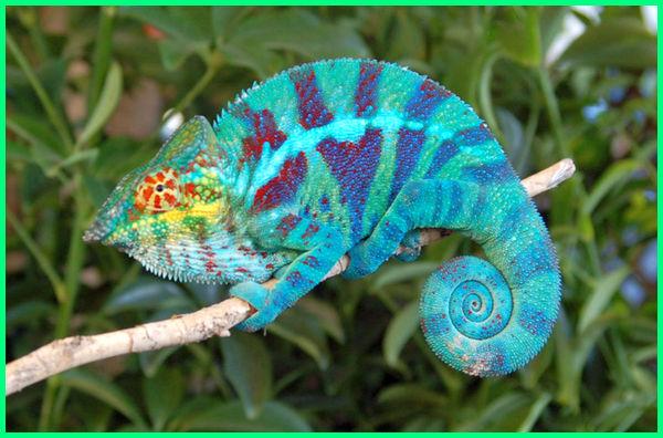 gambar reptil dan namanya, gambar reptil lucu, gambar reptil vertebrata, download gambar binatang reptil, contoh gambar reptil, gambar reptil dan penjelasannya, hewan reptil dan gambarnya