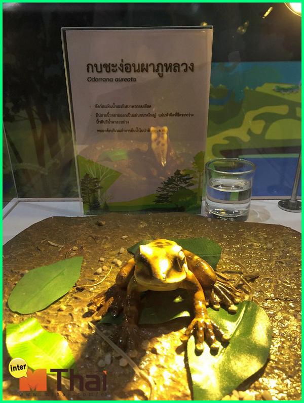 nama hewan bahasa thailand, hewan di thailand, hewan endemik di thailand, hewan aneh di thailand