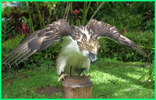770+ Gambar Fauna Asli HD Terbaru