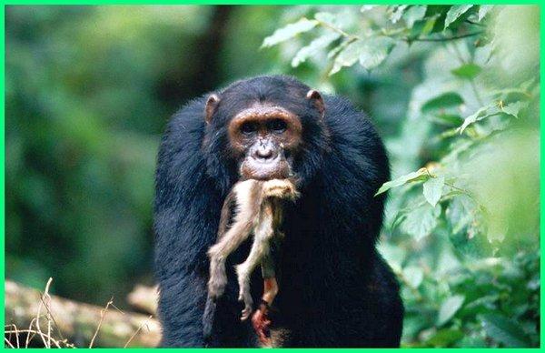 omnivora pemakan segala, omnivora contoh hewan, omnivora yaitu, omnivora disebut, omnivora pengertian omnivora atau omnivor, omnivora adalah, omnivora adalah dan contohnya, omnivora adalah brainly, omnivora adalah hewan yang memakan jenis, omnivora adalah golongan hewan pemakan, omnivore animals