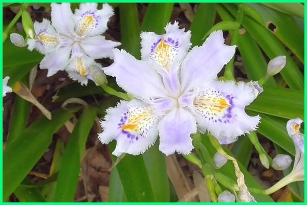 tanaman vertical garden, jenis tanaman vertical garden, tanaman vertikal kultur, macam tanaman vertical garden, nama tanaman vertical garden