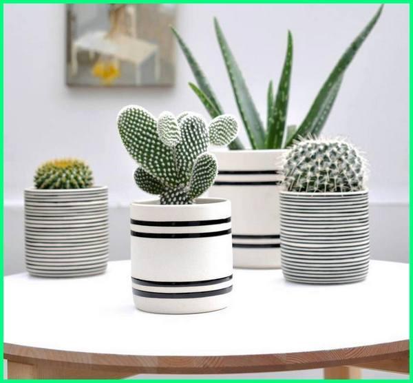 pot kaktus sukulen, pot kaktus mini, rak pot bunga kaktus, pot keramik bunga kaktus, kaktus di pot, cactus garden pot, jual pot kaktus mini, harga kaktus pot kecil, kreasi pot kaktus, aloe vera pot kecil