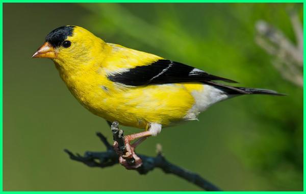 burung mahal di dunia, burung paling mahal dunia, burung termahal dunia, burung ter mahal di dunia, gambar burung mahal di dunia, burung yg mahal di dunia
