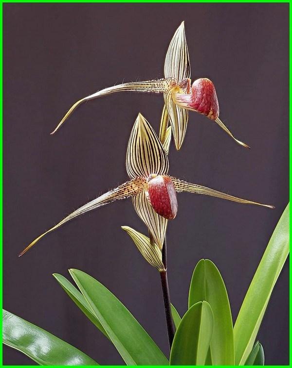 jenis bunga paling mahal di dunia, macam macam bunga paling mahal di dunia, foto bunga paling mahal di dunia, gambar bunga paling mahal di dunia, harga bunga paling mahal, bunga yang paling mahal saat ini, bunga indonesia paling mahal, jenis bunga paling mahal, jenis bunga yang paling mahal