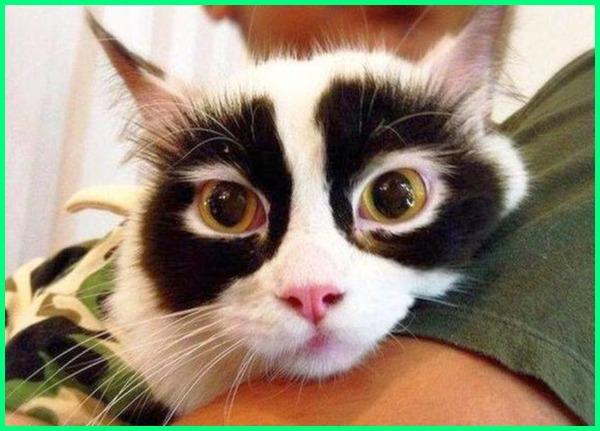 kucing dengan motif bulu unik, motif bulu kucing unik, bulu kucing yang unik, bulu kucing yg unik, gambar bulu kucing unik, 11 bulu kucing paling unik